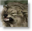 Wolves smell blood