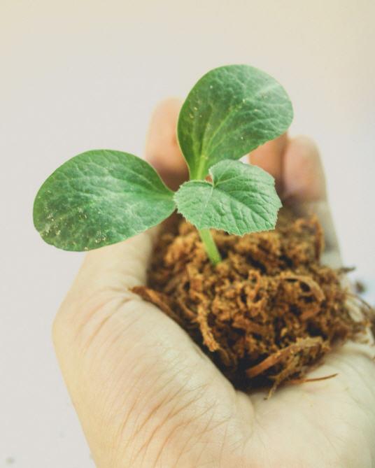 jibberjobber-revenue-streams-plant-tree