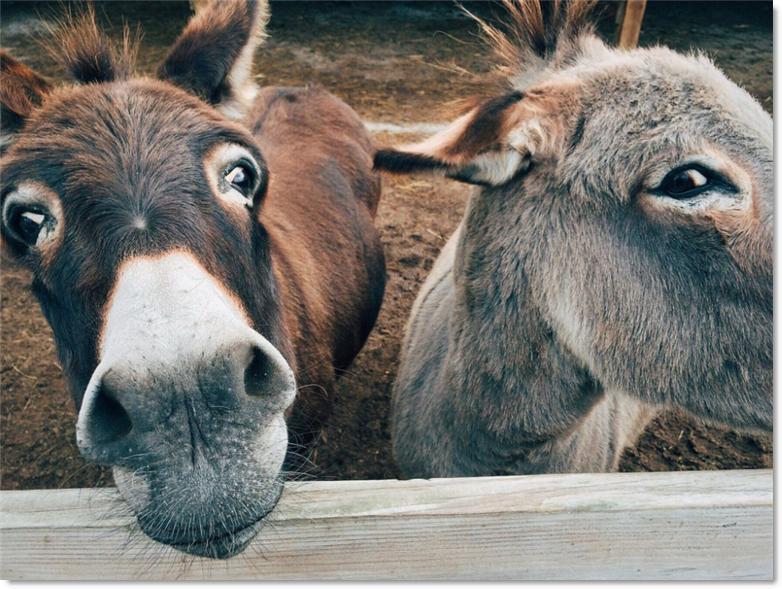 JibberJobber Team Unicorn Donkeys