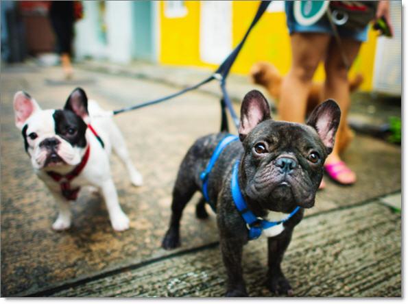 JibberJobber Dog Walk Side Hustle